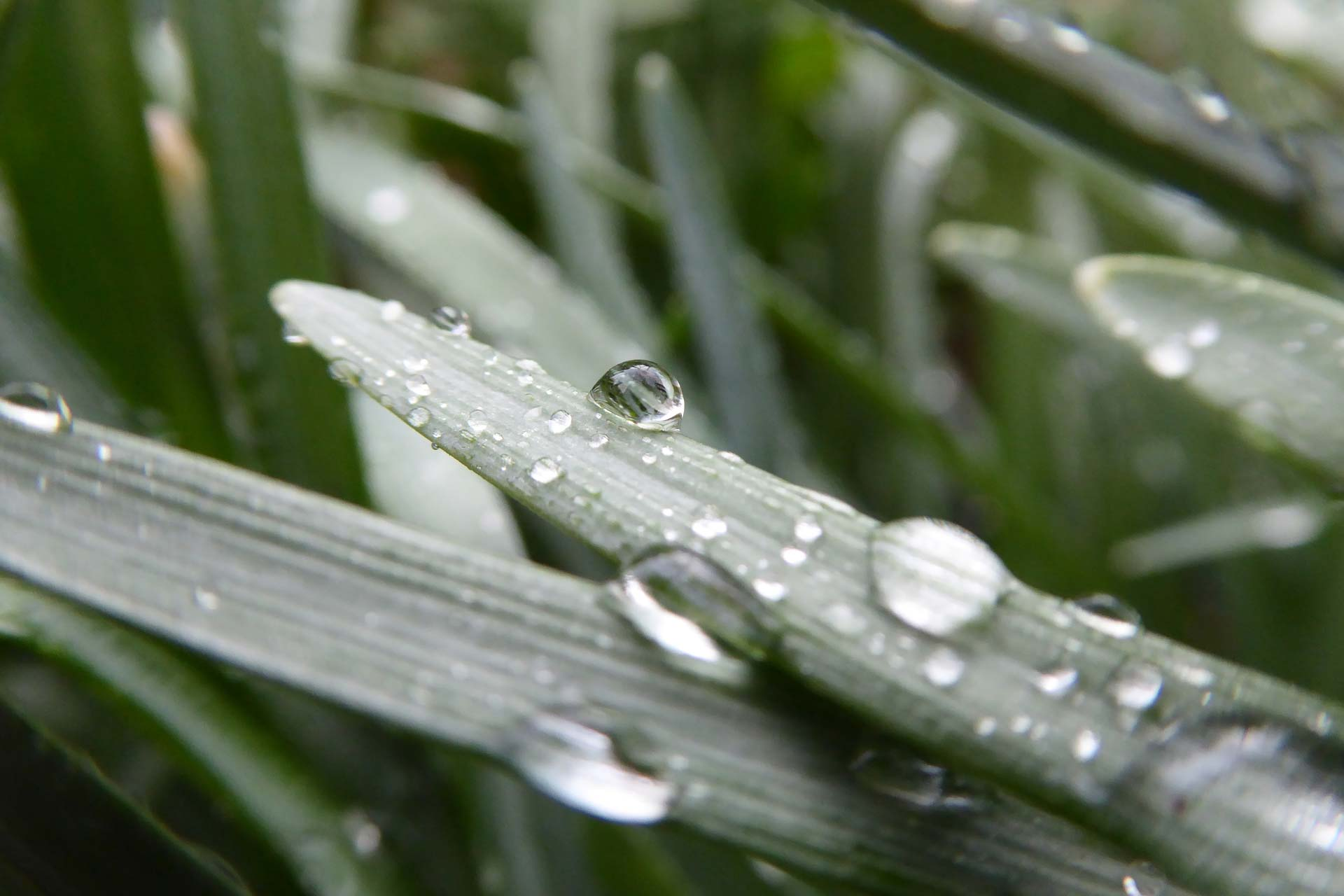 close up shot of leaves and dewy raindrops